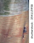 Small photo of Smooth patterned bark of the Birch, Betula utilis ssp jacquemontii, Cambridge, UK.