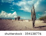 Desert  Cactus In Desert ...