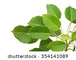 green leaf | Shutterstock . vector #354141089