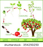 life cycle of apple tree | Shutterstock .eps vector #354250250
