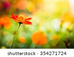 beautiful cosmos flower at... | Shutterstock . vector #354271724