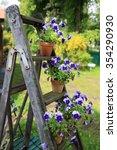 Pansies In Flower Pots...