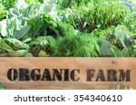 fresh organic produce from farm ... | Shutterstock . vector #354340610