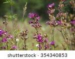 pink wildflowers | Shutterstock . vector #354340853