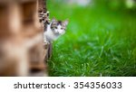 Stock photo adorable kitten outdoors 354356033