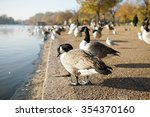 black and white swan by the... | Shutterstock . vector #354370160