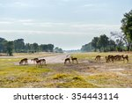impala herd grazing near... | Shutterstock . vector #354443114