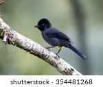 yellow thighed finch perched on ... | Shutterstock . vector #354481268