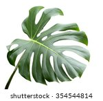 leaf of monstera plant. | Shutterstock . vector #354544814