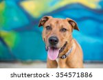 Stock photo happy dog in front of a bright blue graffiti wall 354571886