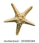 starfish on white background... | Shutterstock . vector #354585284