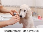 man owner is making manicure of ... | Shutterstock . vector #354596018