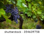 bunch of black grapes in juicy... | Shutterstock . vector #354639758