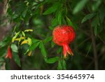 red ripe pomegranates on the... | Shutterstock . vector #354645974