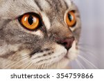 Stock photo portrait of grey cat close up 354759866