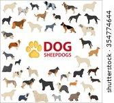 dog sheepdogs breeds. fci dog ... | Shutterstock .eps vector #354774644
