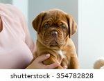 cute dogue de bordeaux puppy... | Shutterstock . vector #354782828