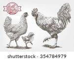 brood hen. sketches made by... | Shutterstock .eps vector #354784979