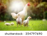 white hen and chickens in... | Shutterstock . vector #354797690