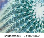Macro Cactus In Botanic Garden.