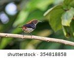 scarlet backed flowerpecker on... | Shutterstock . vector #354818858