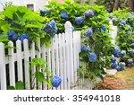 Blue Hydrangea Along The White...