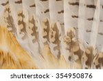 eagle feathers  | Shutterstock . vector #354950876
