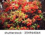 Photo Of Firethorn Berries...