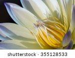 Close Up Lotus