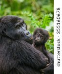 A Female Mountain Gorilla With...