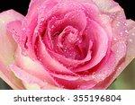 A Close Up Of A Pink Wet Rose.