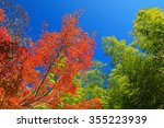 Red Fall Foliage Against The...