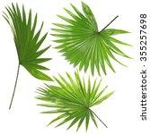 Palm  Leafves  Livistona...