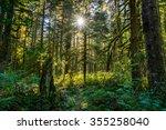 Baker River Trail  Mount Baker...