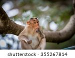 The Bonnet Macaque Is A Macaqu...