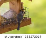 Tufted Titmouse  Baeolophus...