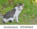 Stock photo typical house cat resting and surveying on the grass 355349669