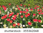 tulip and dafodil flower in the ...
