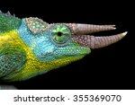 Jackson's Chameleon  Trioceros...
