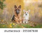 Pembroke Welsh Corgi Puppy Wit...