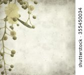 Small photo of textured old paper background with Acacia cyanophylla