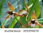 Small photo of SAO PAULO, SP, BRAZIL - NOVEMBER 20, 2011 - Orchid Maxillaria tenuifolia, Orchidaceae originating in the Central America