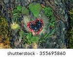 a variety of wild berries in... | Shutterstock . vector #355695860