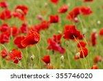 red long headed poppy field ... | Shutterstock . vector #355746020