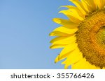 Sunflowers Blooming Against A...