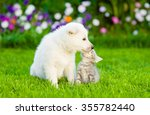Stock photo kitten and puppy are kissing on the green lawn 355782440