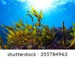 Sunlight And Seaweed