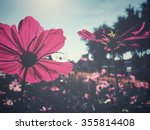 Stock photo pink cosmos flowers 355814408