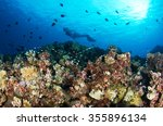 a freediver dives on the... | Shutterstock . vector #355896134