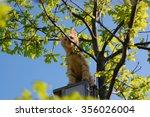 Brown Cat Climbing Tree